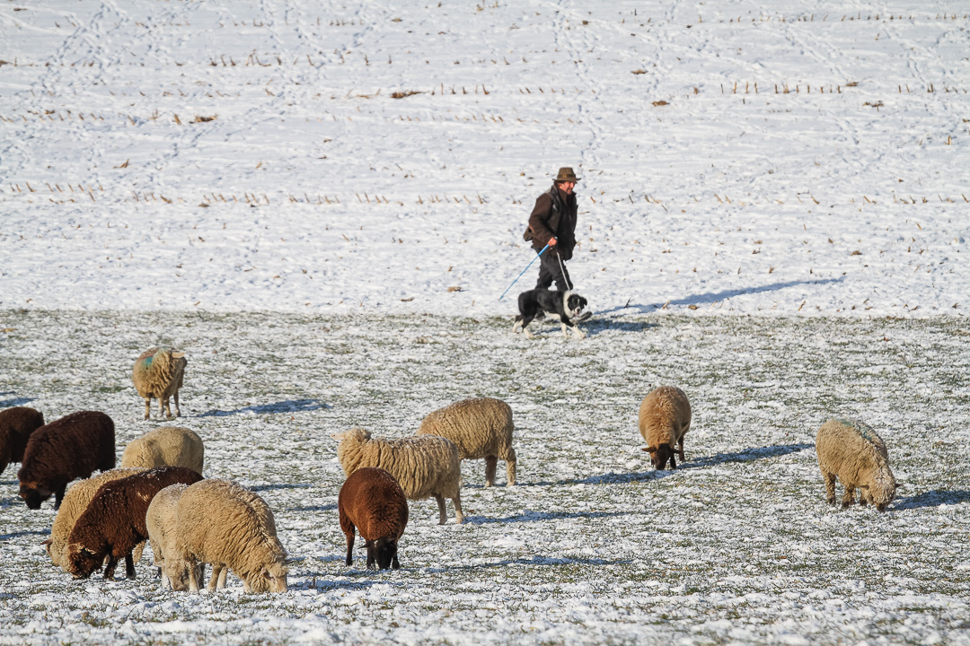 A Day On Winter Transhumance in Gantrischt Natural Park, Switzerland
